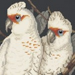 Long-billed Cockatoo cross stitch pattern