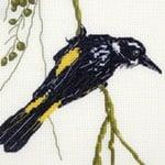 New Holland Honeyeater cross stitch pattern