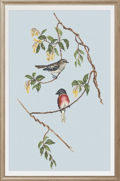 Rose-Breasted Wood-Robin cross stitch pattern