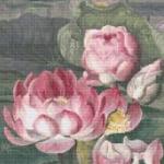 Sacred Lotus Water Lily cross stitch pattern