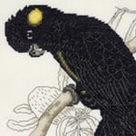 Yellow-tailed Black Cockatoo cross stitch pattern